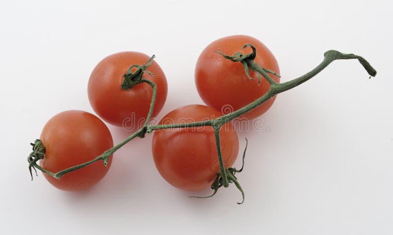 De tomaten van de baby op een wijnstok royalty-vrije stock afbeeldingen