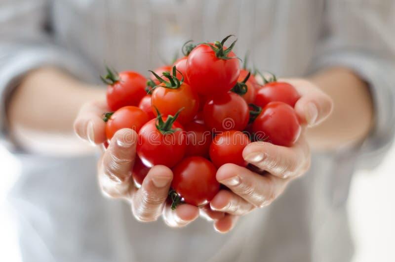 De Tomaten van de kers in Handen Womans stock afbeelding