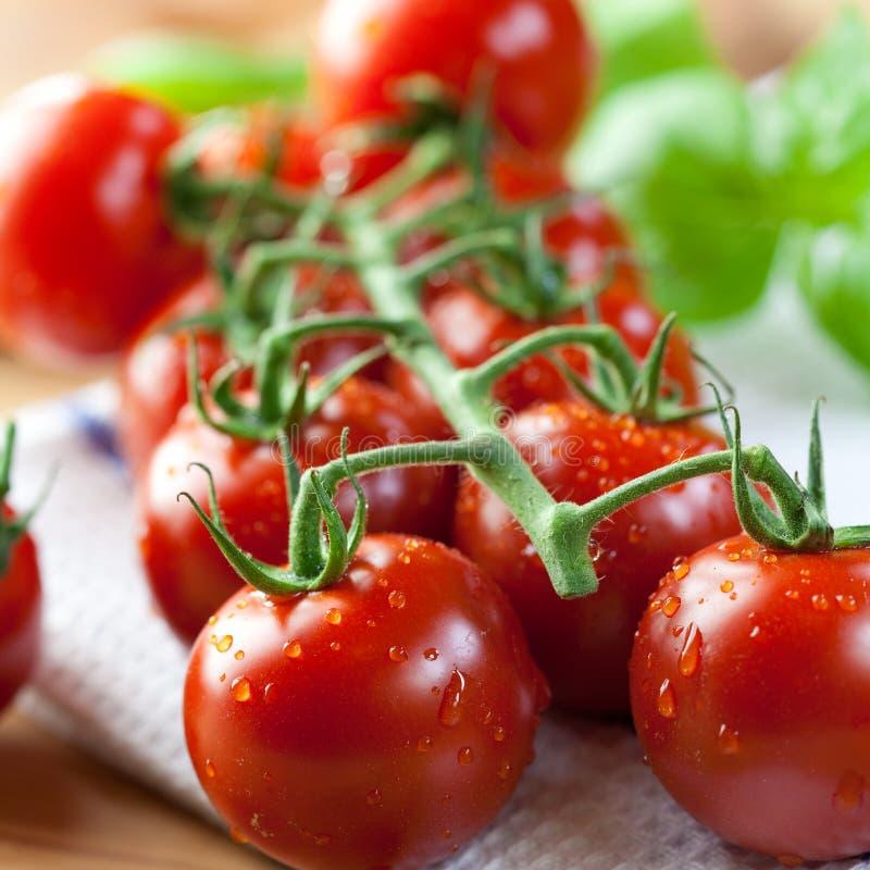 De tomaten van de kers op de wijnstok stock afbeelding