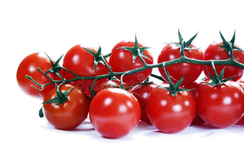 De Tomaten van de wijnstok stock foto's