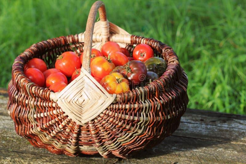 De tomaten van de erfgoedverscheidenheid in manden op rustieke lijst Kleurrijke rode tomaat -, geel, sinaasappel Oogst het planta stock fotografie