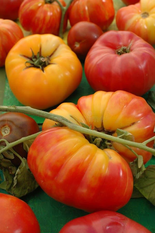 De Tomaten van het erfgoed royalty-vrije stock foto's