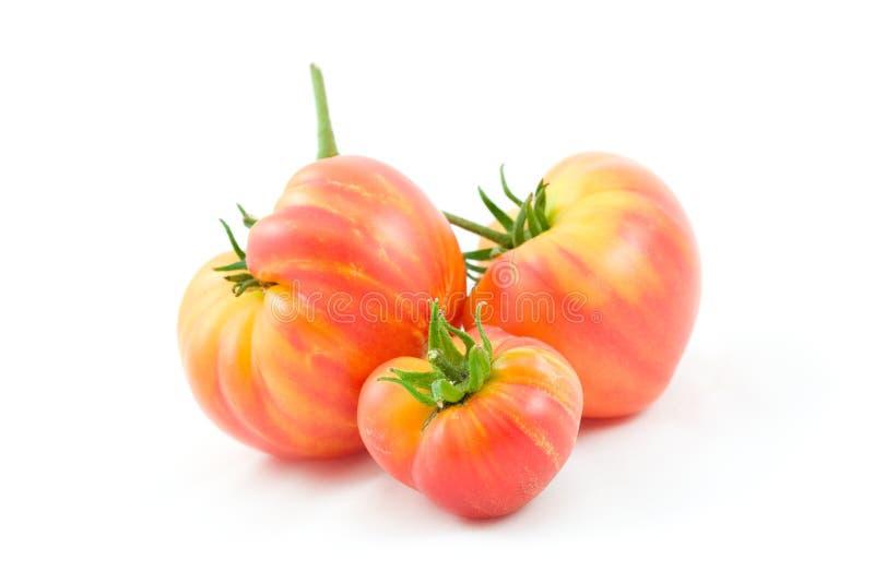 De Tomaten van Hillbilly stock afbeeldingen