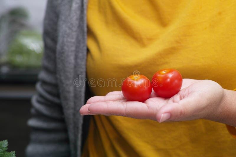 De tomaten van de vrouwenholding in haar dienen de keuken in stock foto's