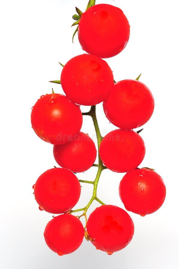 Download De tomatenkers van de tak stock afbeelding. Afbeelding bestaande uit maaltijd - 10778045
