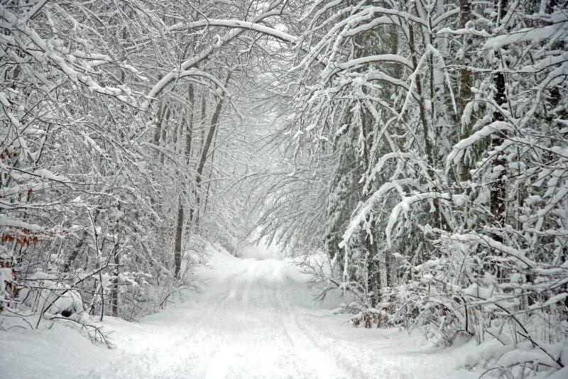 De toneel Boom Gevoerde Weg van de Winter royalty-vrije stock fotografie