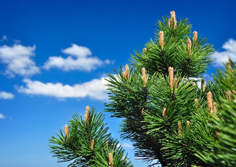 De toneelachtergrond van de boom stock fotografie