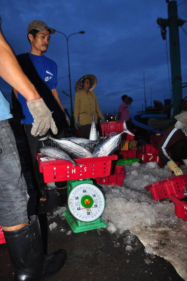 De tonijn wordt gewogen bij de Hon Ro-zeehaven aan de vrachtwagen aan een lokale verwerkingsinstallatie in de stad van Nha Trang royalty-vrije stock afbeelding