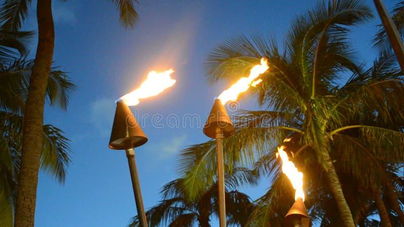 De Toortsen van Hawaï stock videobeelden