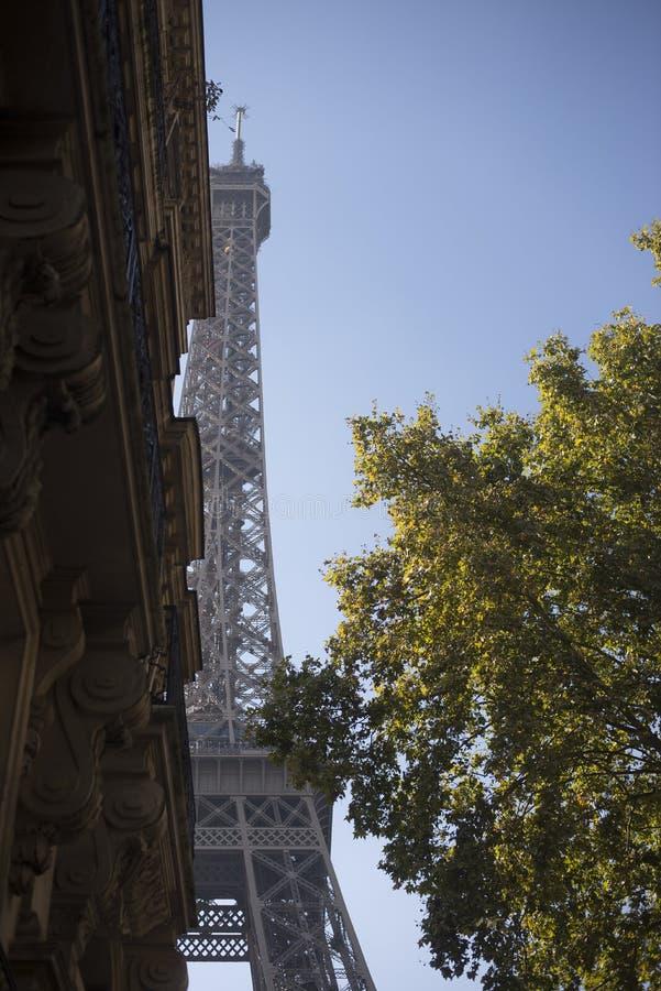 De Toren van Eiffel achter Boom en de Bouw stock fotografie