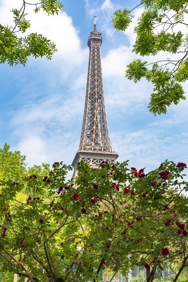 De Toren van Eiffel in de lente, Parijs, Frankrijk stock fotografie