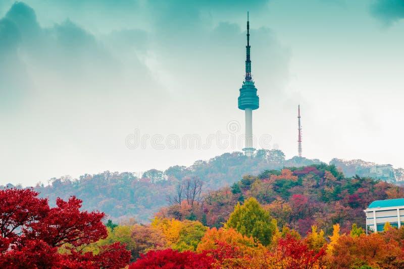 De Toren van Namsanseoel en de boomberg van de de herfstesdoorn in Korea stock foto