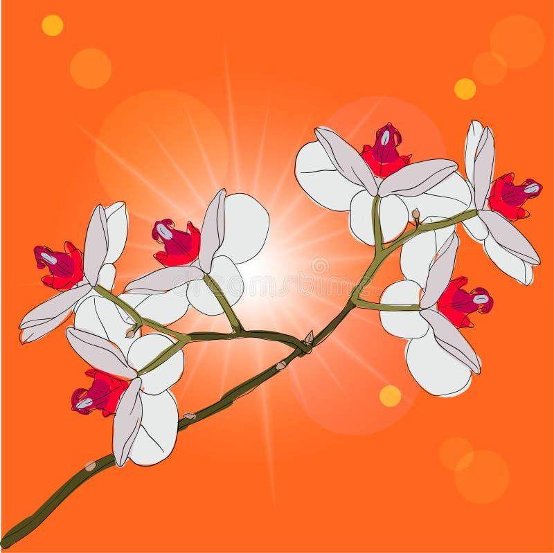 De tot bloei komende orchideeën van het takje op een achtergrond royalty-vrije illustratie