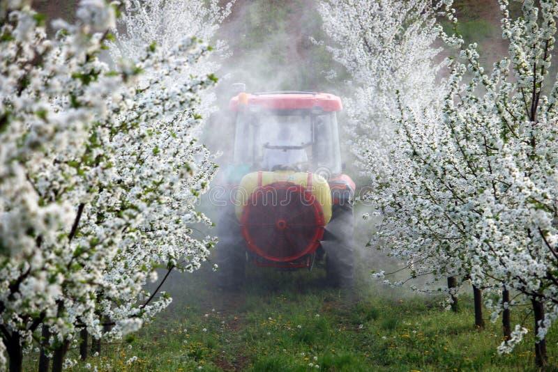 De tractor bespuit insecticide in kersenboomgaard stock foto's