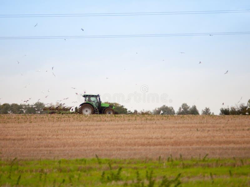 De tractor van de scène zijmanieren van het landschapslandbouwbedrijf het ploegen gebiedsvogels beh stock afbeelding