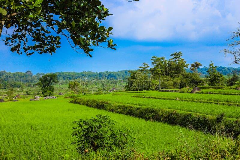 De traditionele Landbouw in Indonesië stock afbeelding