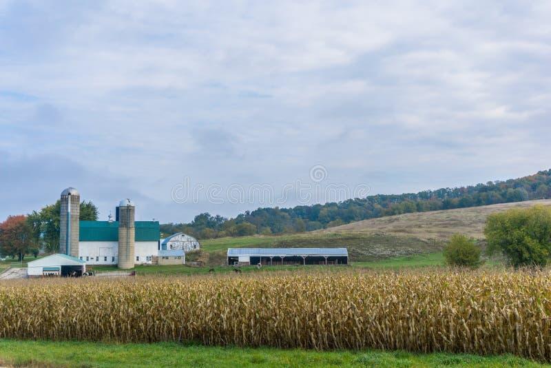 De traditionele Melkveehouderij van Wisconsin stock afbeelding