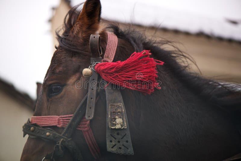 De traditionele transylvanian paarden lopen door Roemeens dorp, royalty-vrije stock fotografie