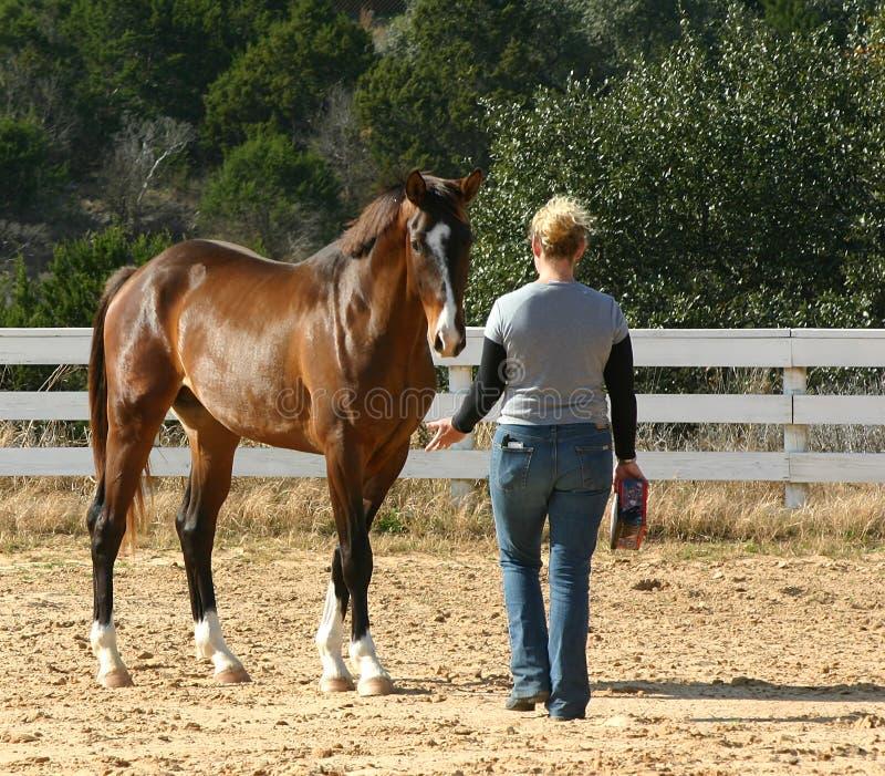 De trainer van het paard stock afbeeldingen