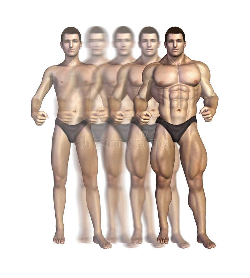 De Transformatie van de bodybuilder royalty-vrije illustratie