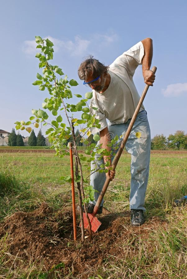 De transplantatie van de abrikozenboom royalty-vrije stock foto