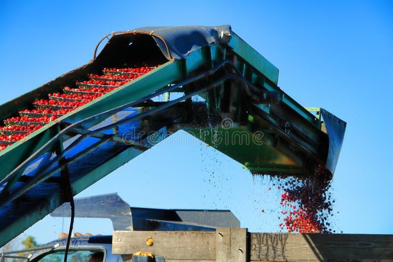 De Transportband van de Amerikaanse veenbes en de Machine van de Landbouw van de Lader stock foto