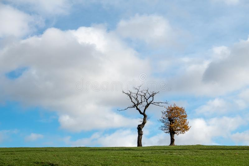 Trees on a meadow in autumn stock image