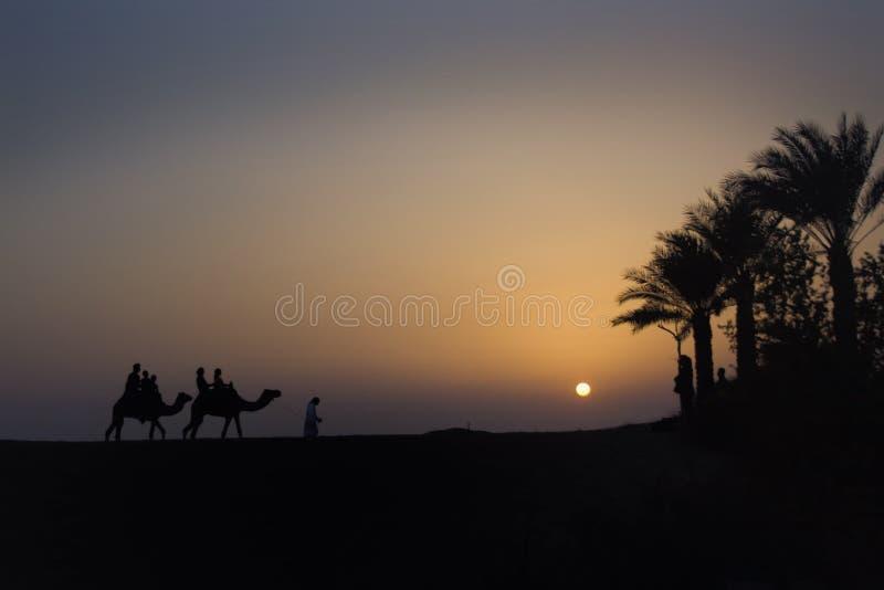 De Trein van de Kameel van de woestijn royalty-vrije stock fotografie