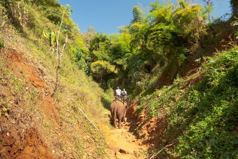 De trekking van de olifant stock foto's