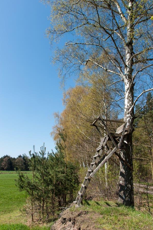 De tribune van de ladder bij een berk royalty-vrije stock fotografie