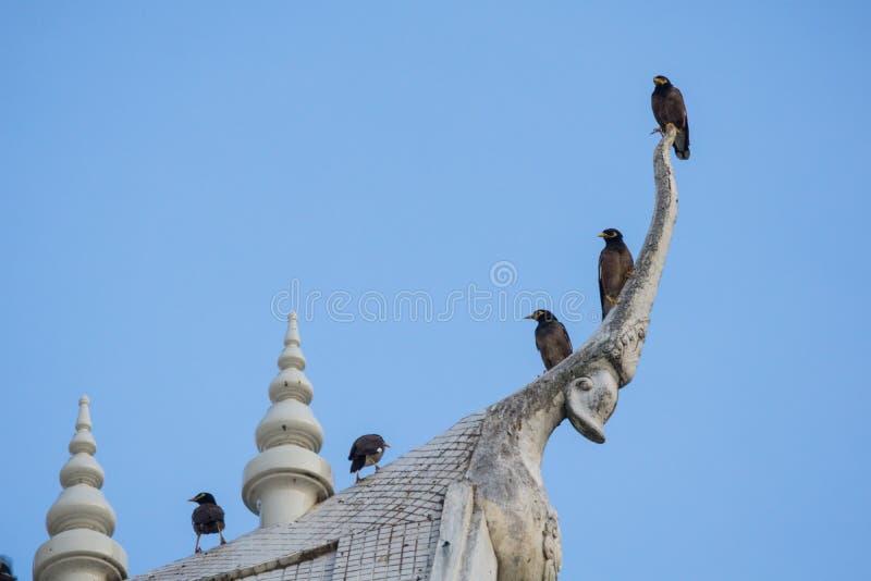 De tribune van de Mynavogel op dak stock foto