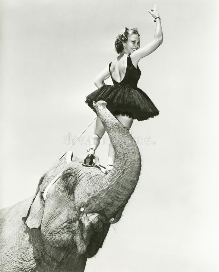 De tribunes van de circusuitvoerder op het hoofd van de olifant stock afbeelding