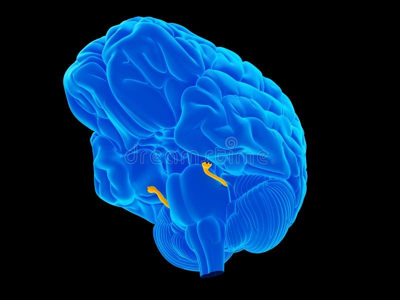 De trigeminal zenuw vector illustratie