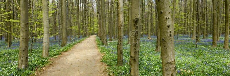 De trog van de weg het bos royalty-vrije stock fotografie