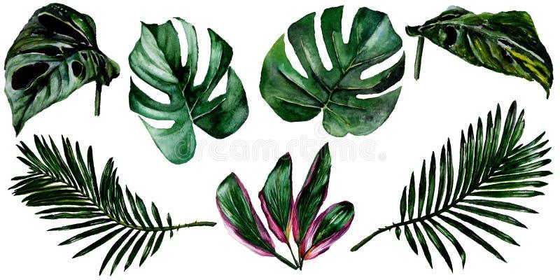 De tropische bladeren van Hawaï in een geïsoleerde waterverfstijl stock illustratie