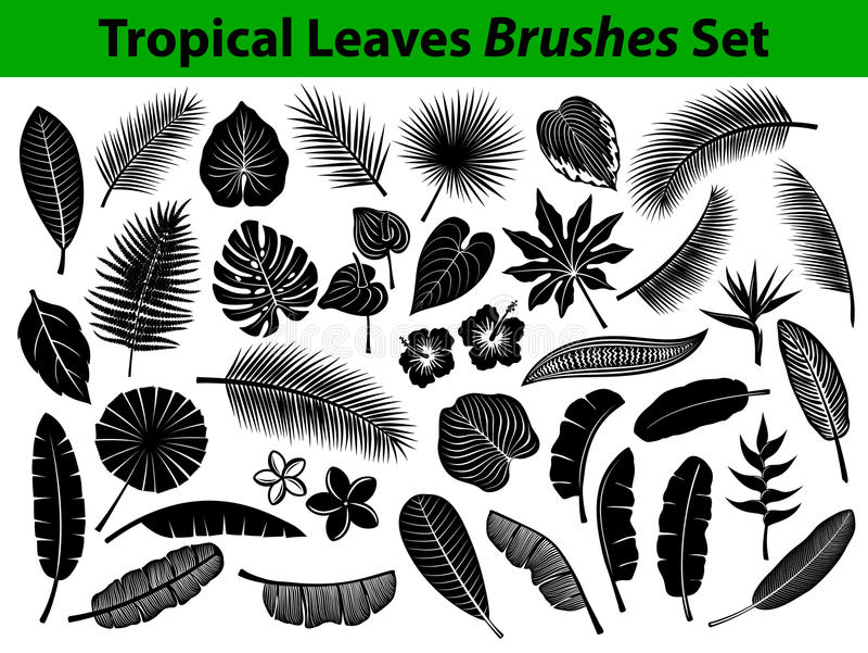 De tropische Exotische Inzameling van het Bladerensilhouet met sommige bloemen in zwarte kleur stock illustratie