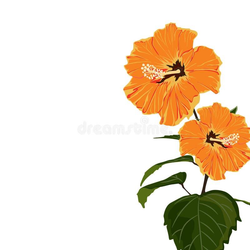 De tropische exotische oranje tak van de hibiscusbloem, elegant kaartmalplaatje royalty-vrije illustratie