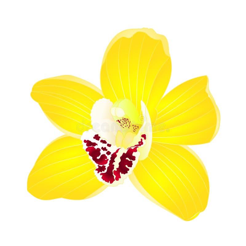 De tropische gele bloem van Orchideecymbidium realistisch op witte uitstekende vector editable illustratie als achtergrond stock illustratie