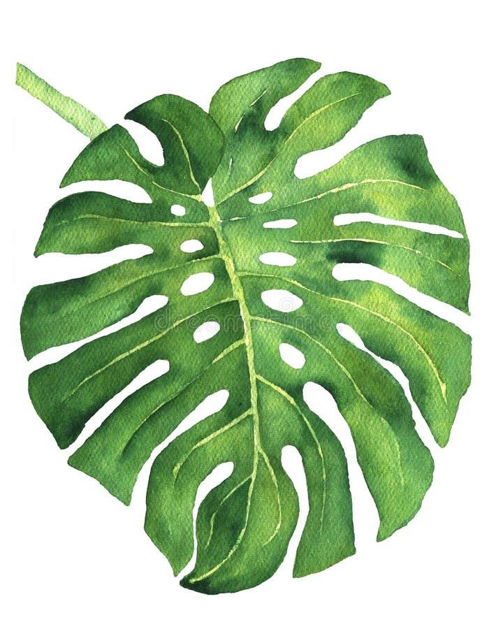De tropische illustratie van bladmonstera royalty-vrije illustratie