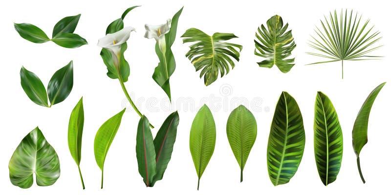 De tropische Inzameling van Bladeren Vector ge?soleerde elementen op de witte achtergrond E royalty-vrije illustratie