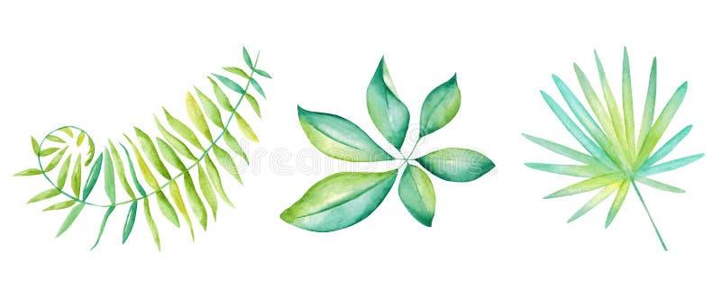 De tropische Inzameling van Bladeren Waterverf geïsoleerde elementen op de witte achtergrond stock foto's