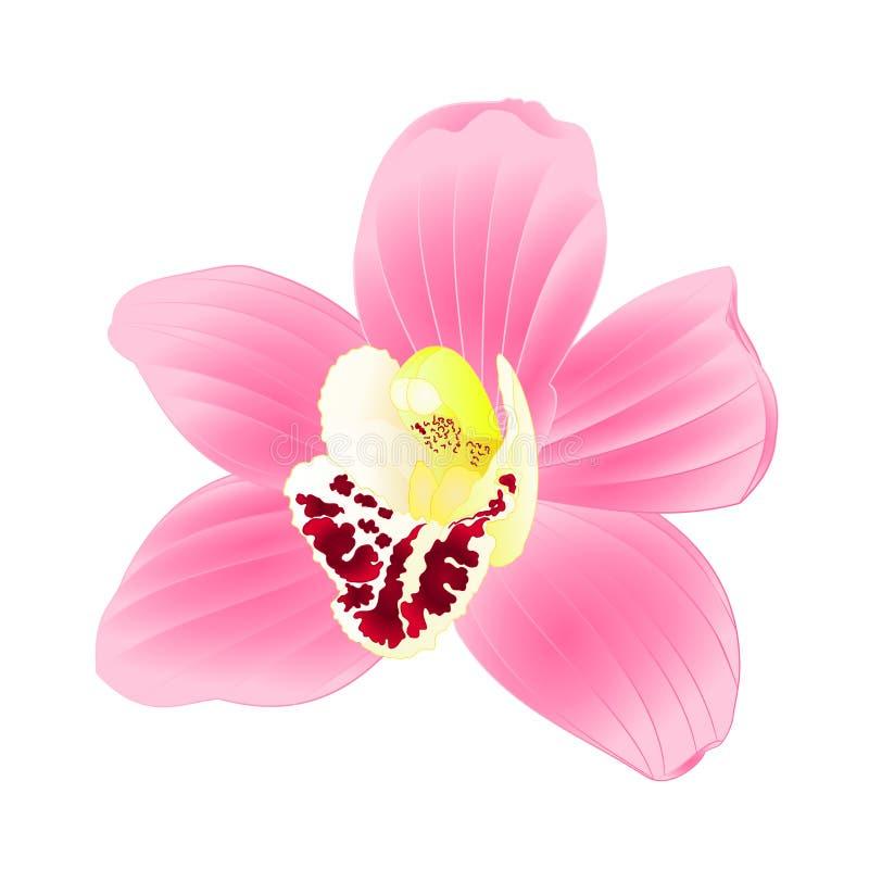 De tropische roze bloem van Orchideecymbidium realistisch op witte uitstekende vector editable illustratie als achtergrond royalty-vrije illustratie