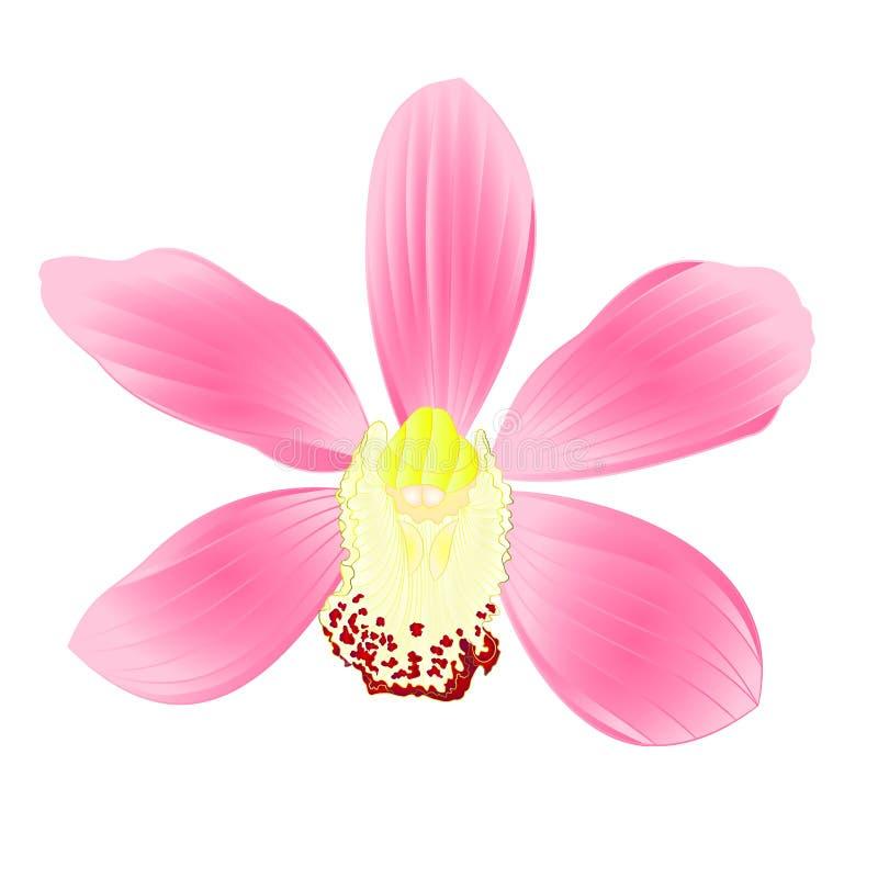 De tropische roze bloem van Orchideecymbidium realistisch op witte uitstekende vector editable illustratie als achtergrond stock illustratie