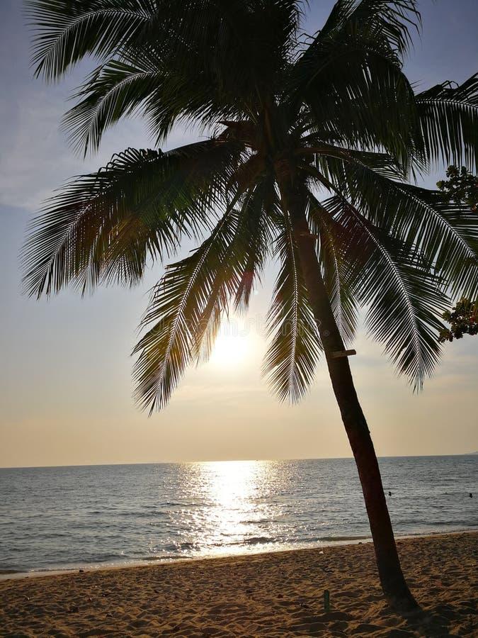 De tropische strandscène met palm cocunut boom en ocen stock foto