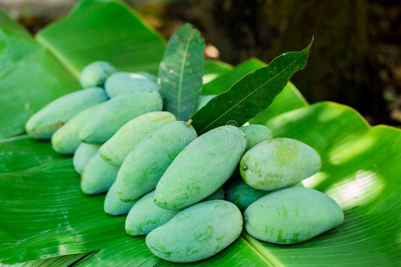 de tropische Thaise groene mango is populair fruit op banaanblad, heeft de mango een uniek aroma met zure smakelijke en hoge vita stock foto