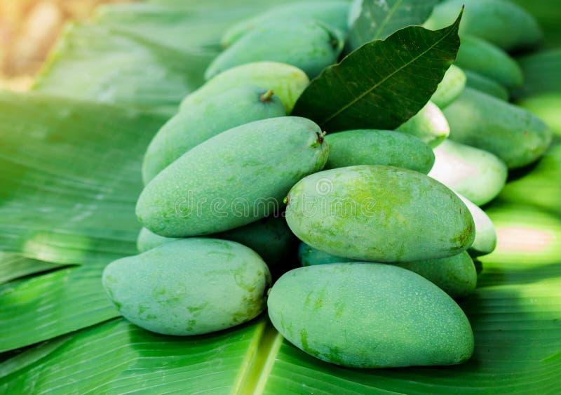 de tropische Thaise groene mango is populair fruit op banaanblad, heeft de mango een uniek aroma met zure smakelijke en hoge vita royalty-vrije stock afbeelding