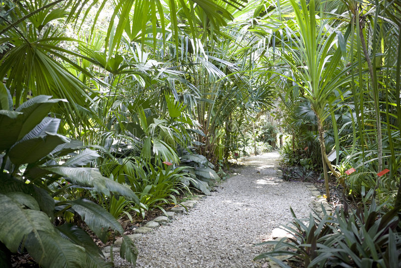 De tropische Tuin van het Kruid royalty-vrije stock afbeelding