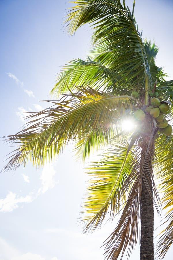 De tropische van het de Achtergrond aardlandschap van de Palmenwildernis Ontwerpweergave van de Vakantiereis Blauwe hemel Fotogra royalty-vrije stock foto