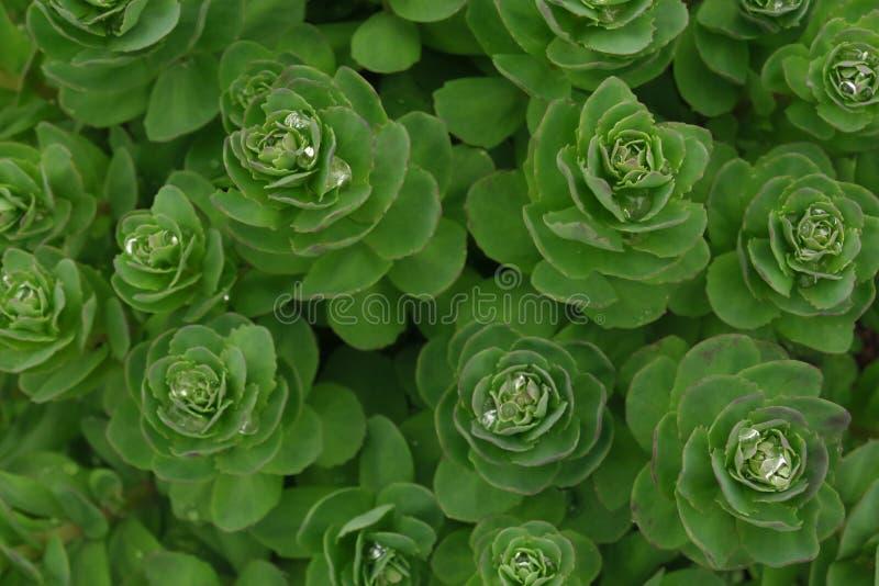 De tropische van de de installatiestruik van het bladerengebladerte achtergrond van de de regelingsaard bloemen die op witte acht royalty-vrije stock fotografie