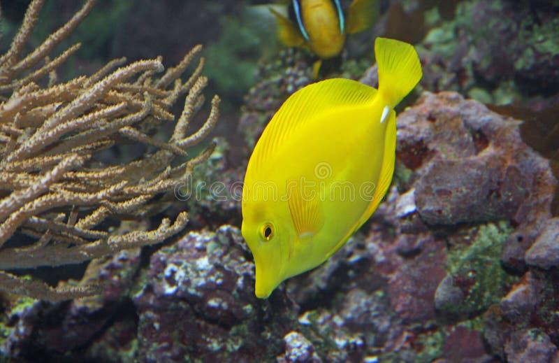 De tropische vissen en zwemmen in de duidelijke warme zeewaters stock afbeeldingen